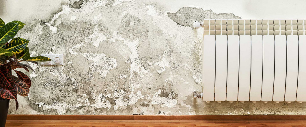 mold on a wall in Cicero, IL